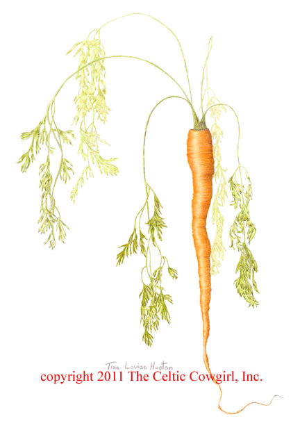 """carrots botany Carrots depicted in ancient manuscripts  known as the """"vienna dioscorides,""""  the oldest and most valuable work in the history of botany and pharmacology."""